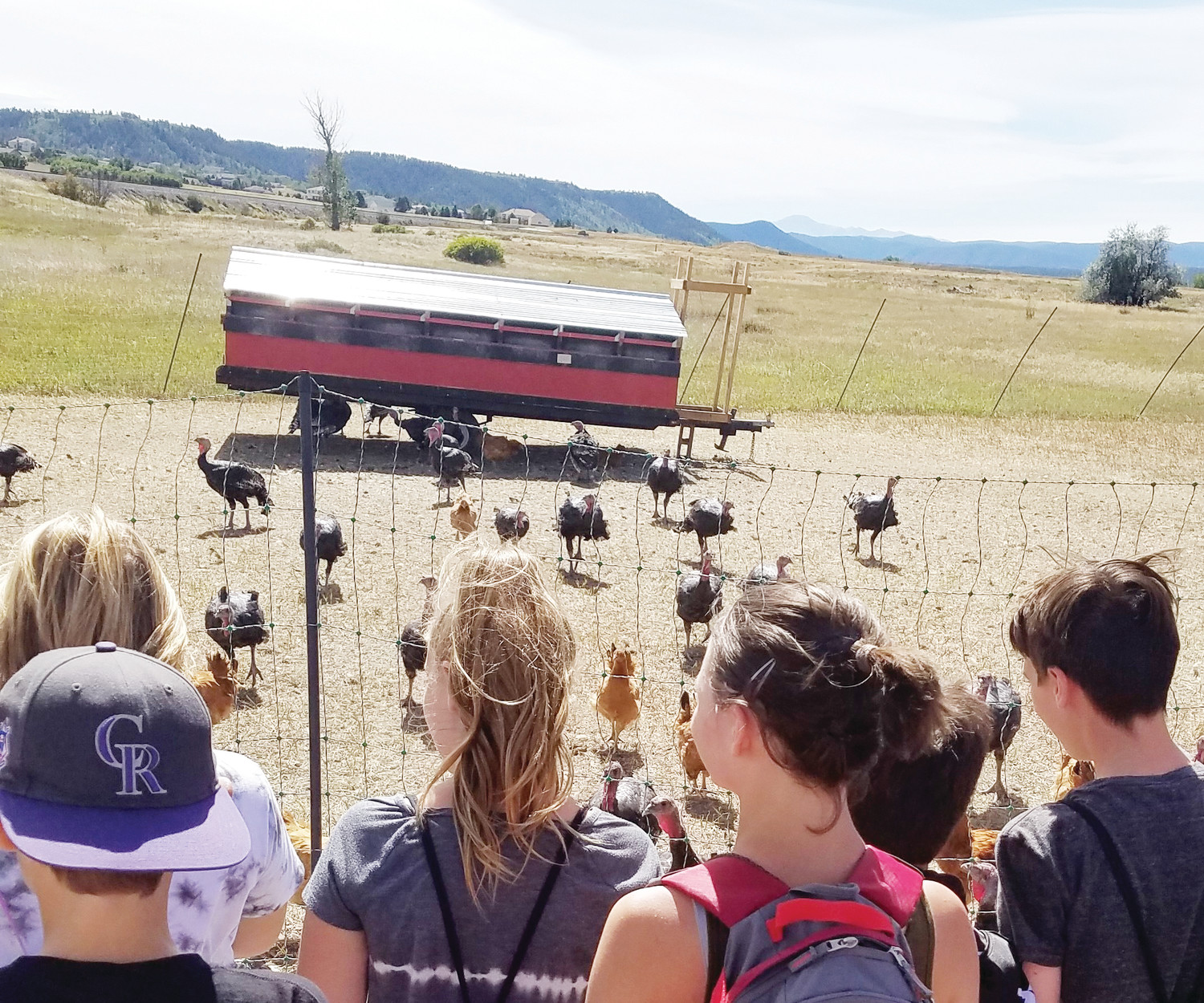 A group of students admire turkeys at the Colorado Agricultural Leadership Foundation's (CALF) Lowell Ranch. Lowell Ranch is a working, educational ranch in Castle Rock.