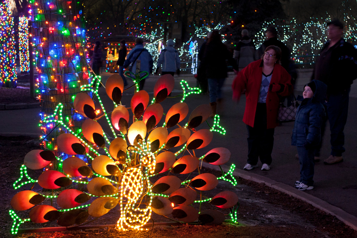 Zoo Lights at the Denver Zoo sees about 7,000 guests a night.