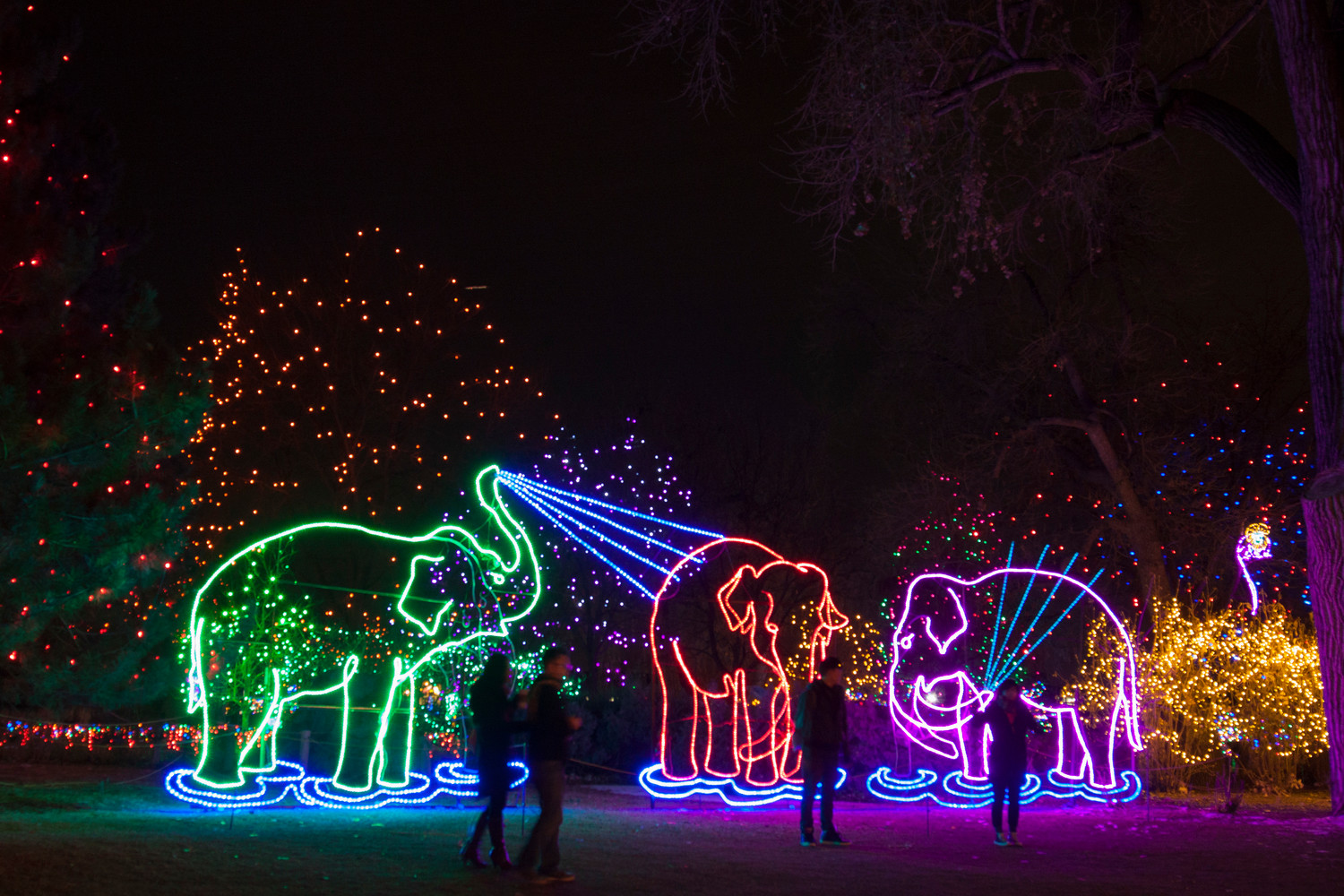 During Zoo Lights, about 130 animated animal sculptures fill the Denver Zoo.
