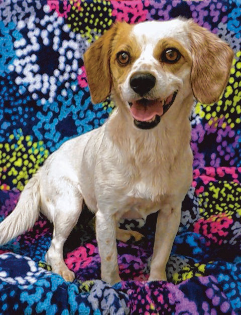 Sumter Spca Dogs For Adoption