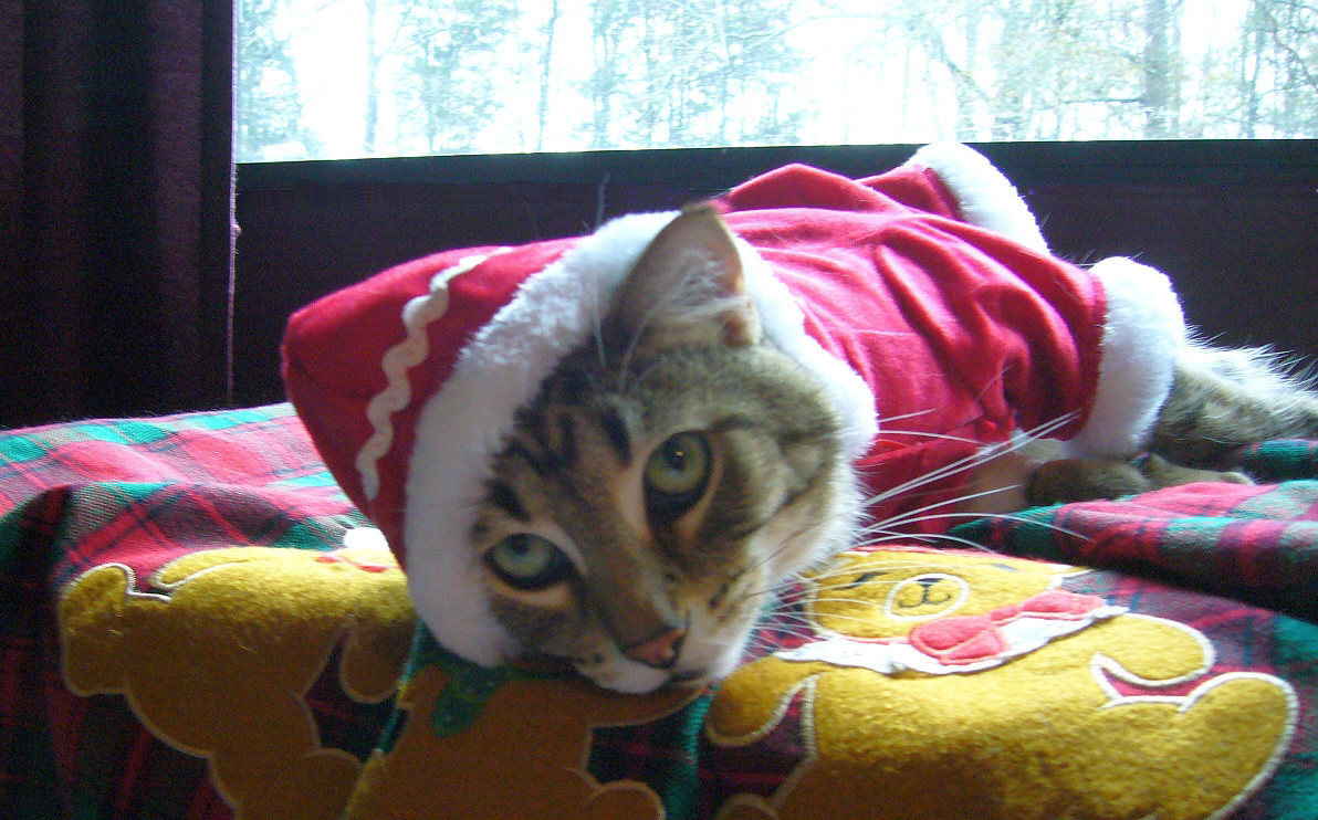 The writer's cat is not happy in his Christmas outfit, nor with the other trappings of the holidays.
