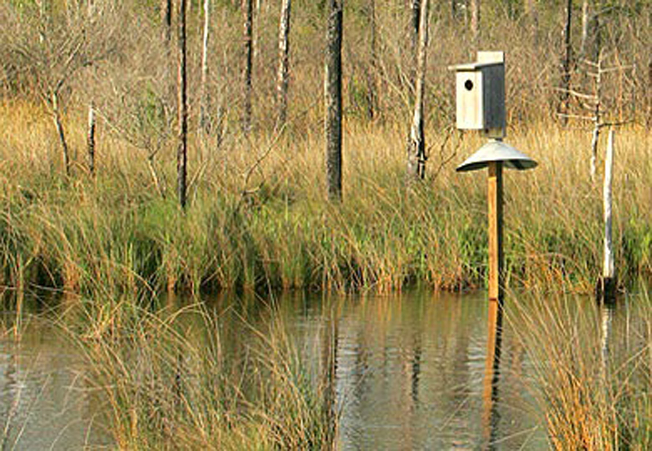 DNR wood duck box applications available; deadline is Nov. 1 | The ...