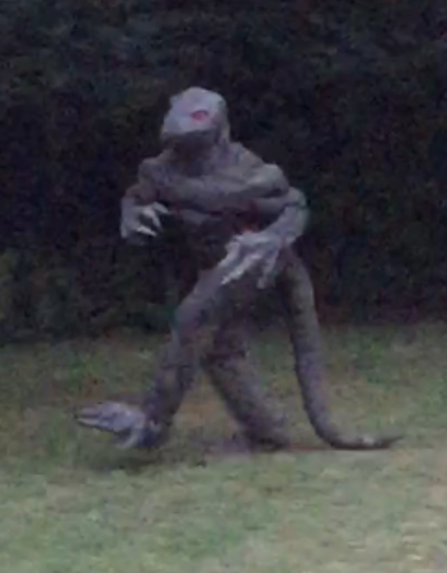 The last known photo of the legendary 'Lizard Man' of Scape Ore Swamp was purportedly taken and submitted by a Sumter Item reader in August 2015 walking along a treeline near Bishopville.