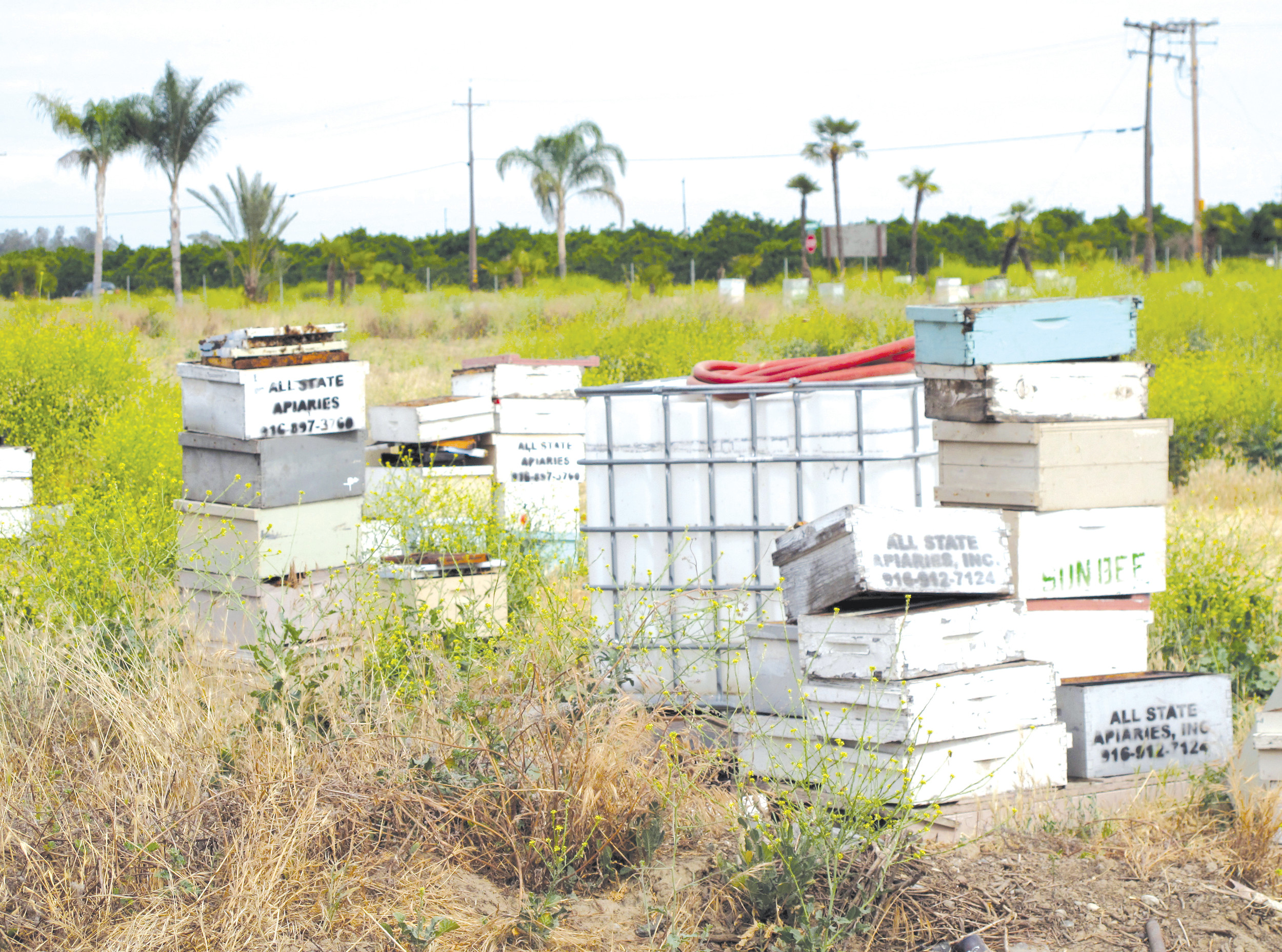 Several of the thousands of recovered beehives stolen in California are shown near Sanger, California. The bee industry is buzzing over the arrest of a man accused of stealing nearly $1 million in hives from California's almond orchards.
