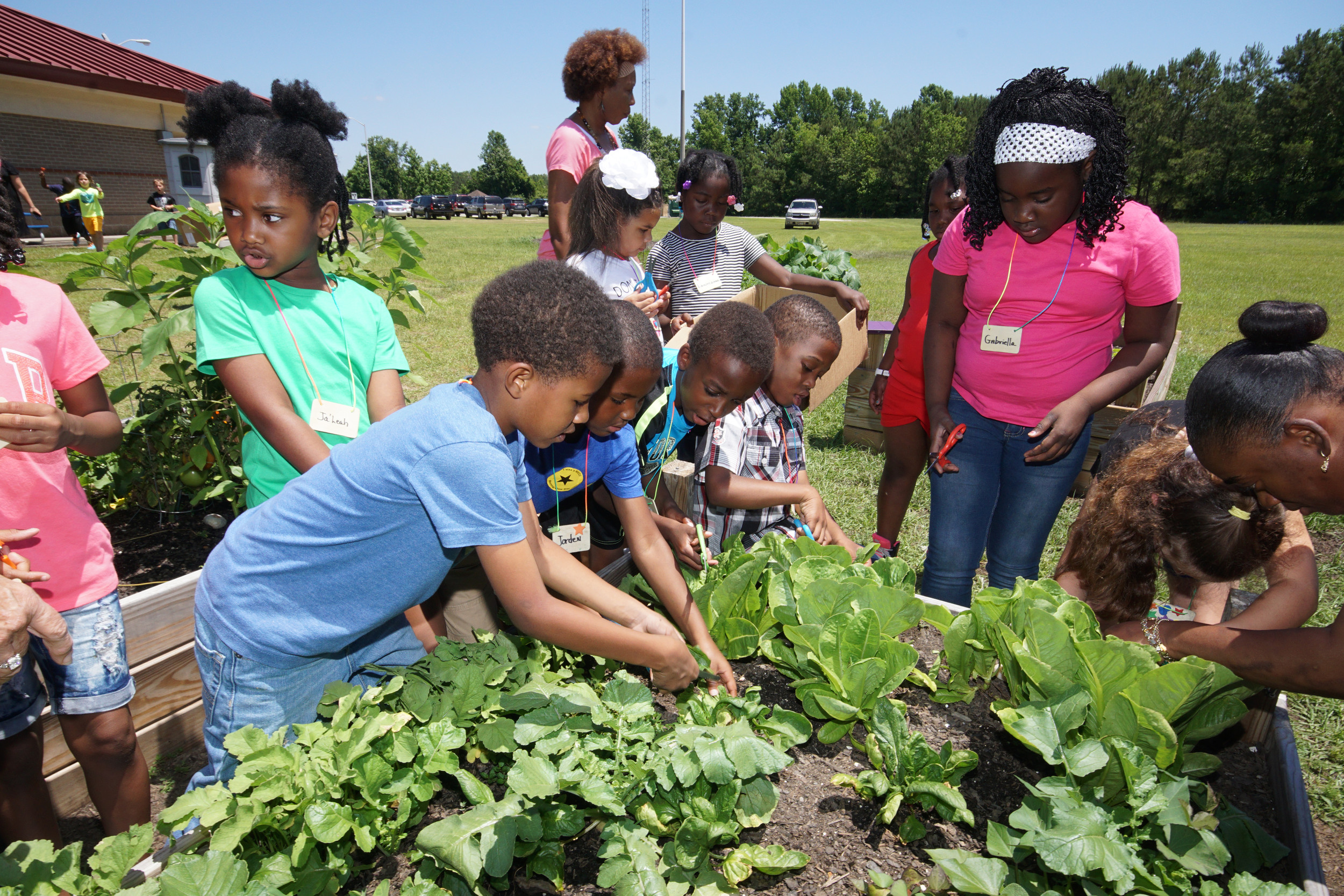 Manning Early Childhood Center first-graders relished harvesting the crops they helped raise behind the school.
