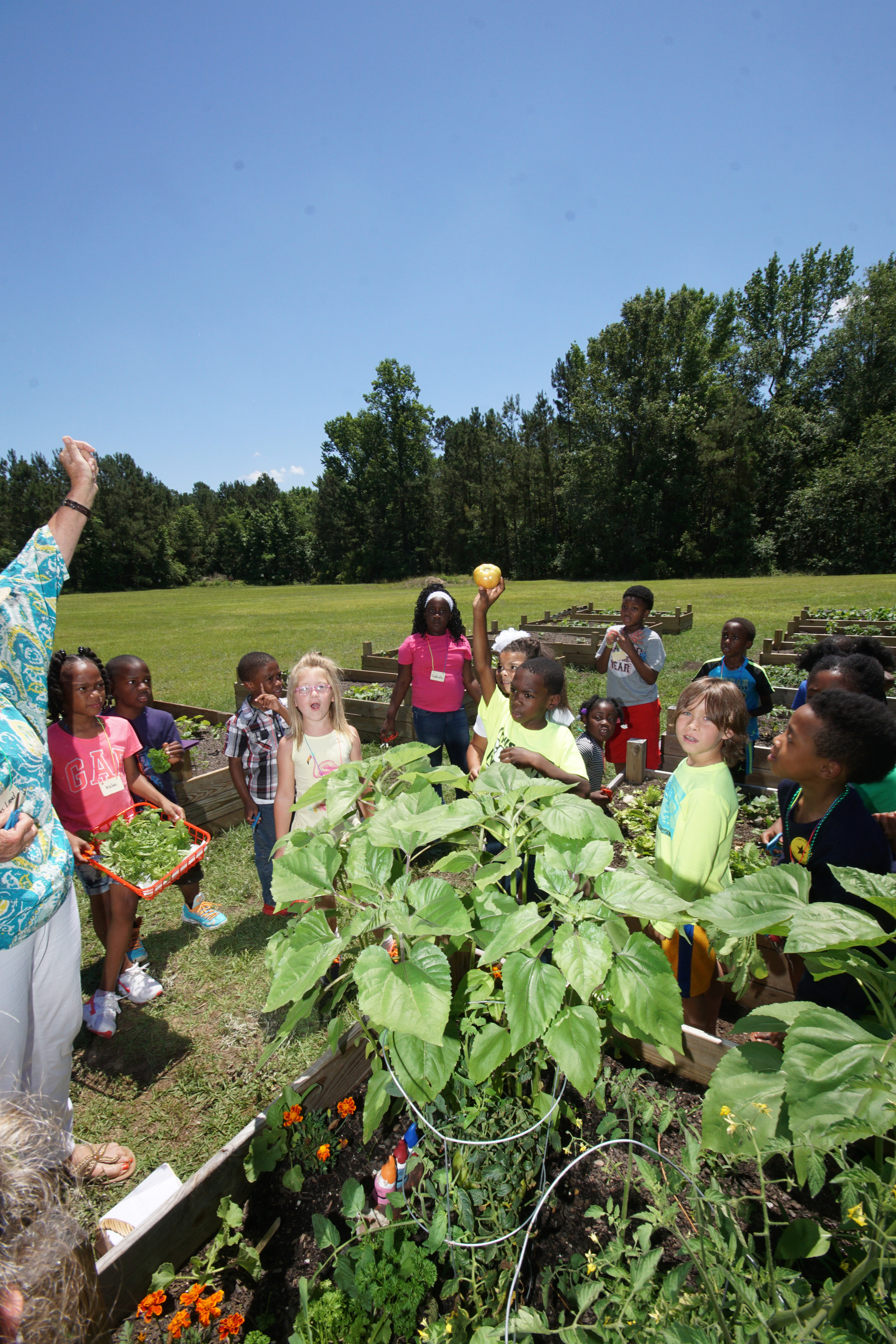 A tomato harvested by first graders at Manning Early Childhood Center is raised in triumph by a young gardener.
