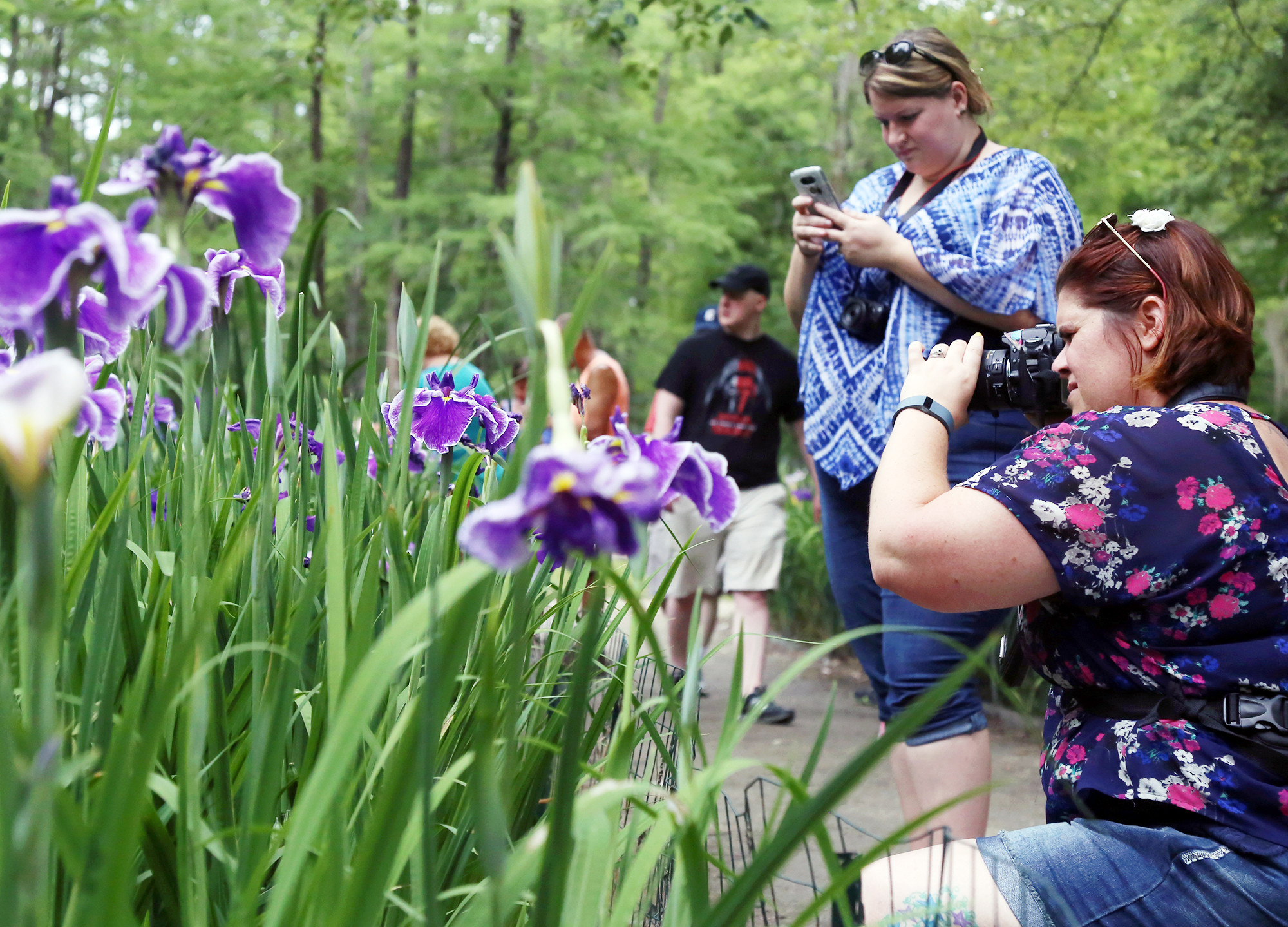 77th iris festival opens thursday the sumter item rebecca kevern and kristen vaughn take pictures of the blooming japanese irises at swan lake during izmirmasajfo