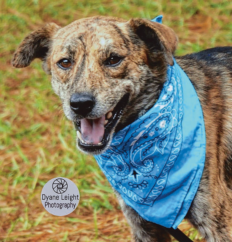 Owen is a laid-back guy looking for his best friend. This wonderful pup has a calm personality, walks well on a leash, and gets along nicely with other dogs. If you would like to meet Owen, please call our adoption coordinator at (803) 774-3232 or email rescuesumtersc@gmail.com. Sumter Animal Control is located at 1240 Winkles Road, (803) 436-2066. Thank you for considering a homeless pet. You can view more adoptable pets on the Sumter Animal Control Facebook page. Remember to check with us if your pet is lost.