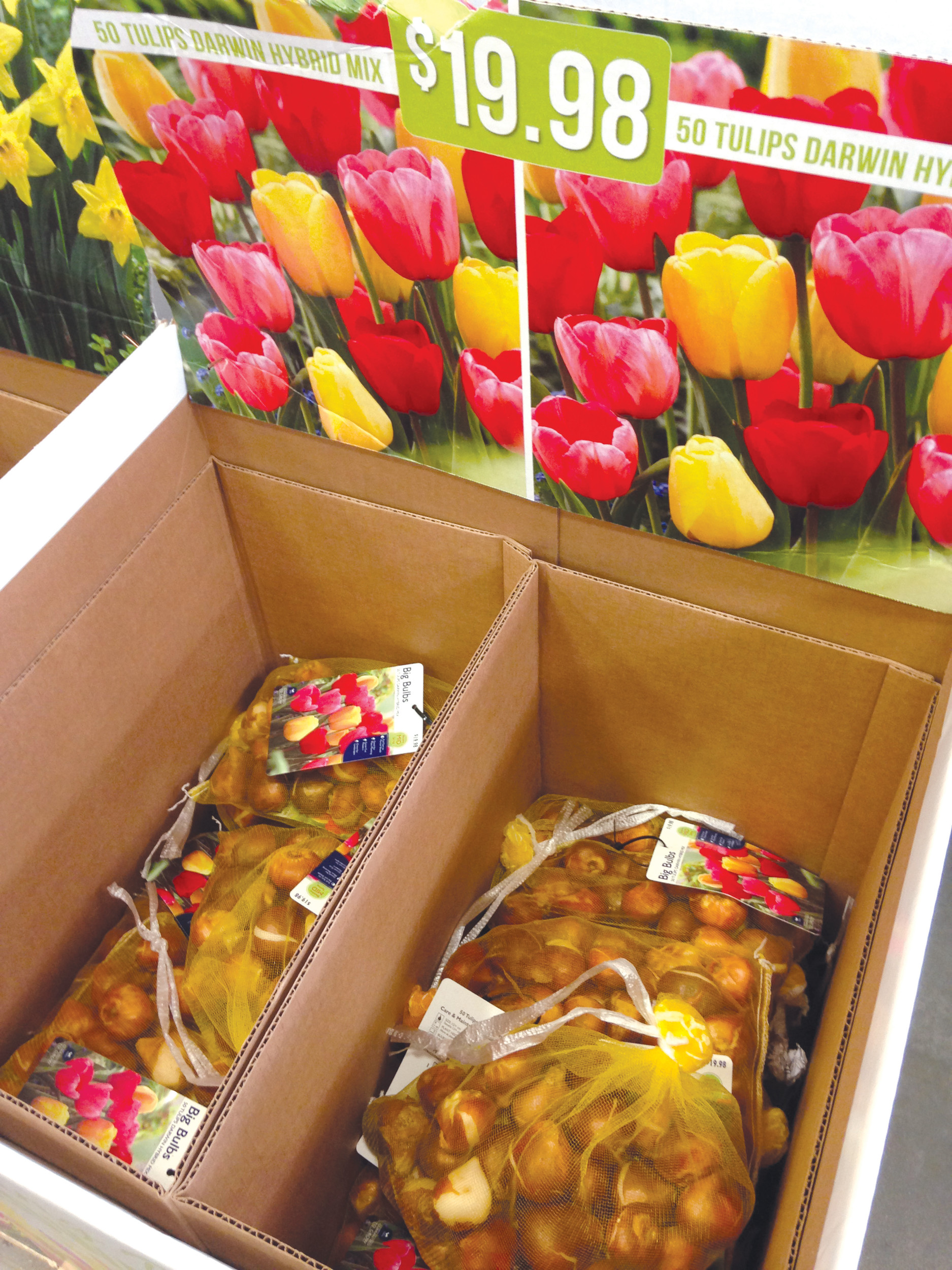 Stores are already stocking assortments of bulbs for spring color, but don't plant them too early this fall.