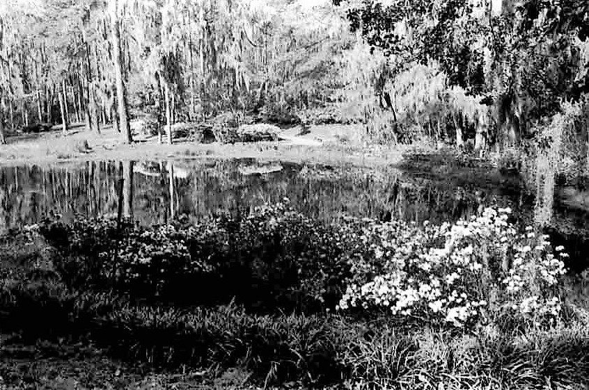 Mill Pond in early spring, 1975.