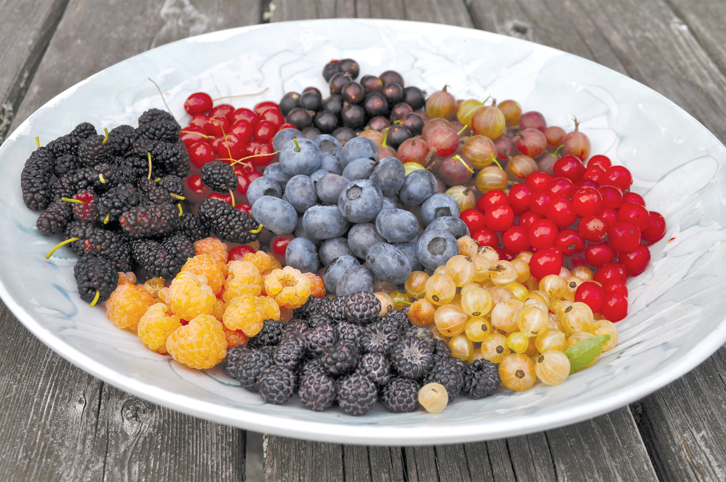 A bowl of berries grown and harvested in New Paltz, New York, is seen. Berries are the quintessential summer fruit, but with a choice of appropriate varieties, raspberries, blackberries and blueberries can go on to yield their delectable bounty into fall.