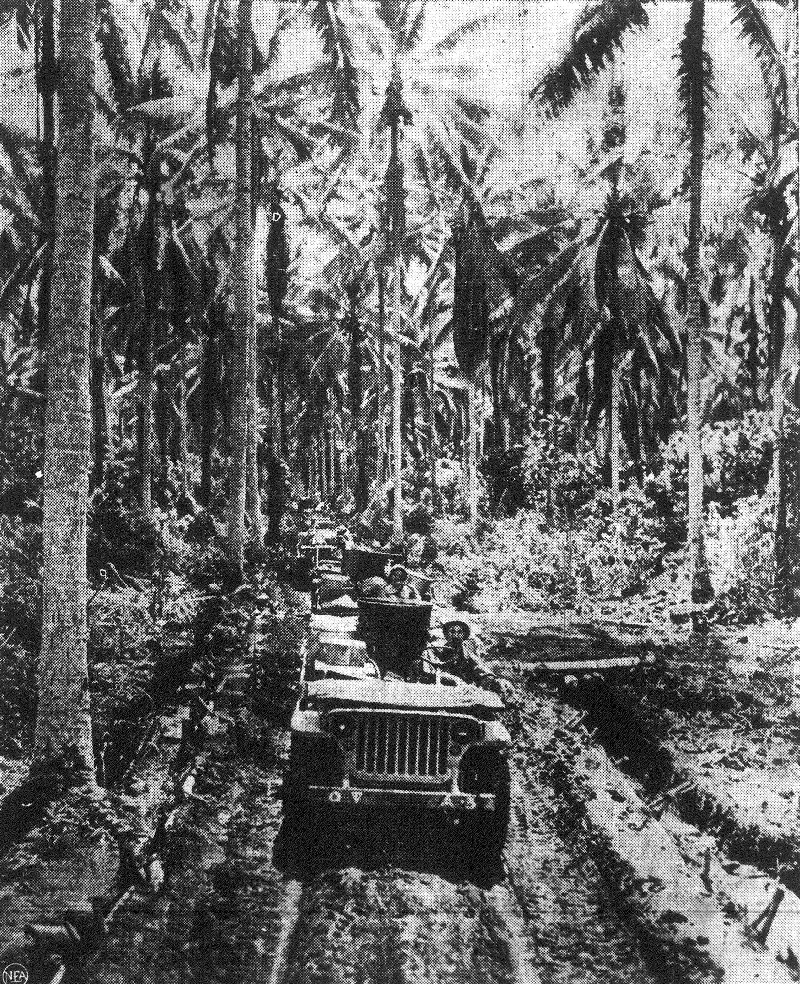 1945 - Up a muddy jungle road hacked through with palms in New Guiena rolls a caravan of Jeeps, bournd for the first food and mail for troops who were hungry for both.
