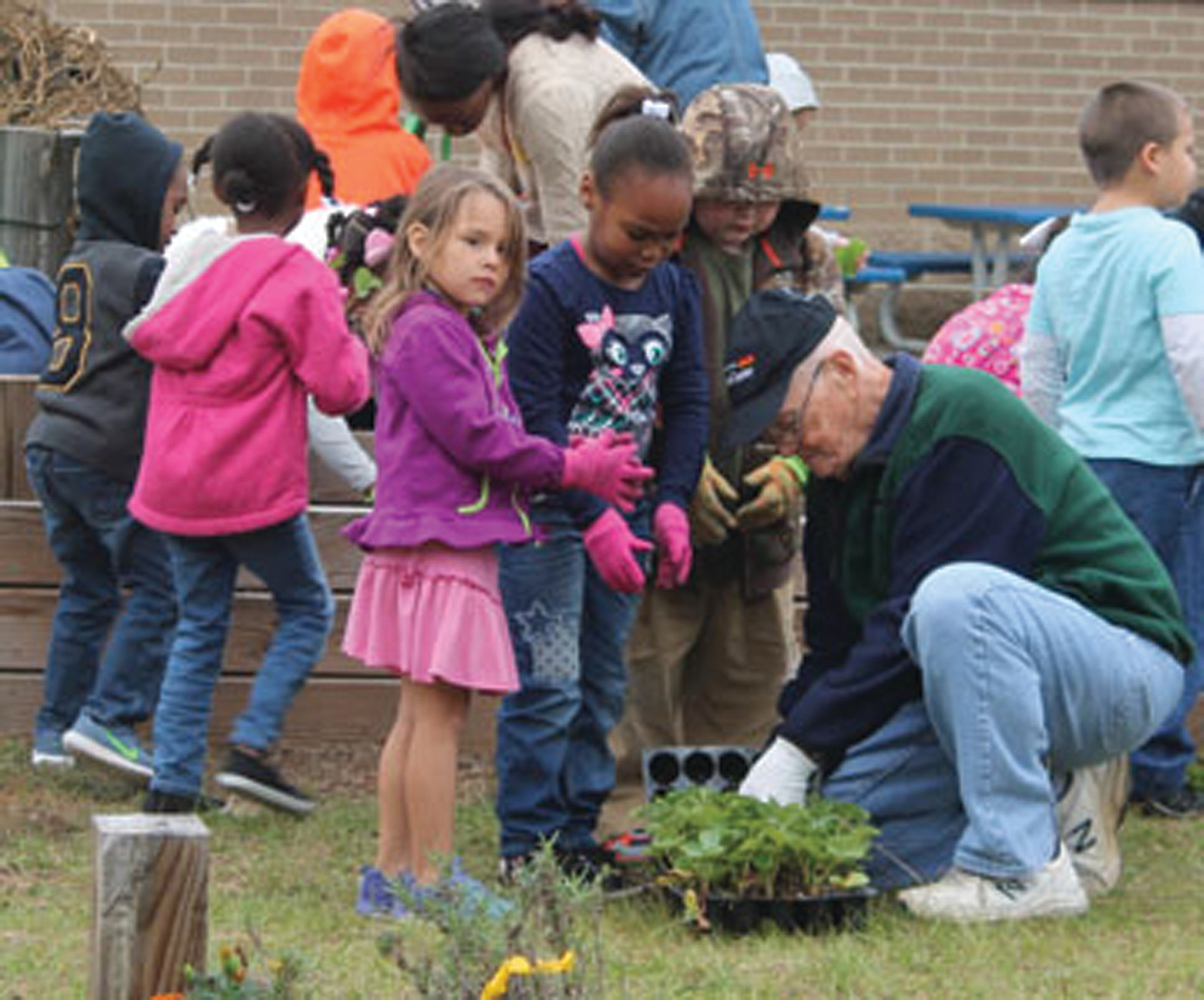 Master Gardener and volunteer Larry Arlen hands kindergarten students at Manning Early Childhood Center strawberry plants to plant in their garden.