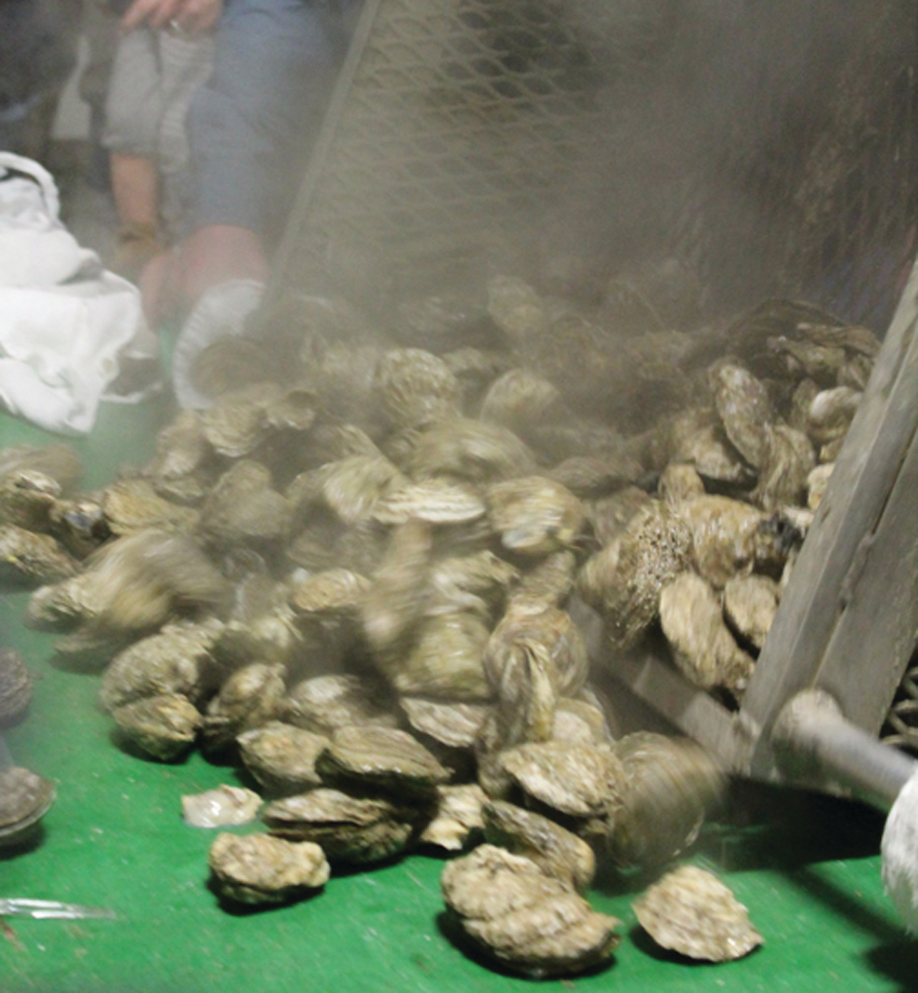 More than 3,600 pounds of oysters were enjoyed at the St. Matthias Oyster Roast on Jan. 20 at the Flowers' Tomato Shed off U.S. 301 between Ram Bay and Summerton.