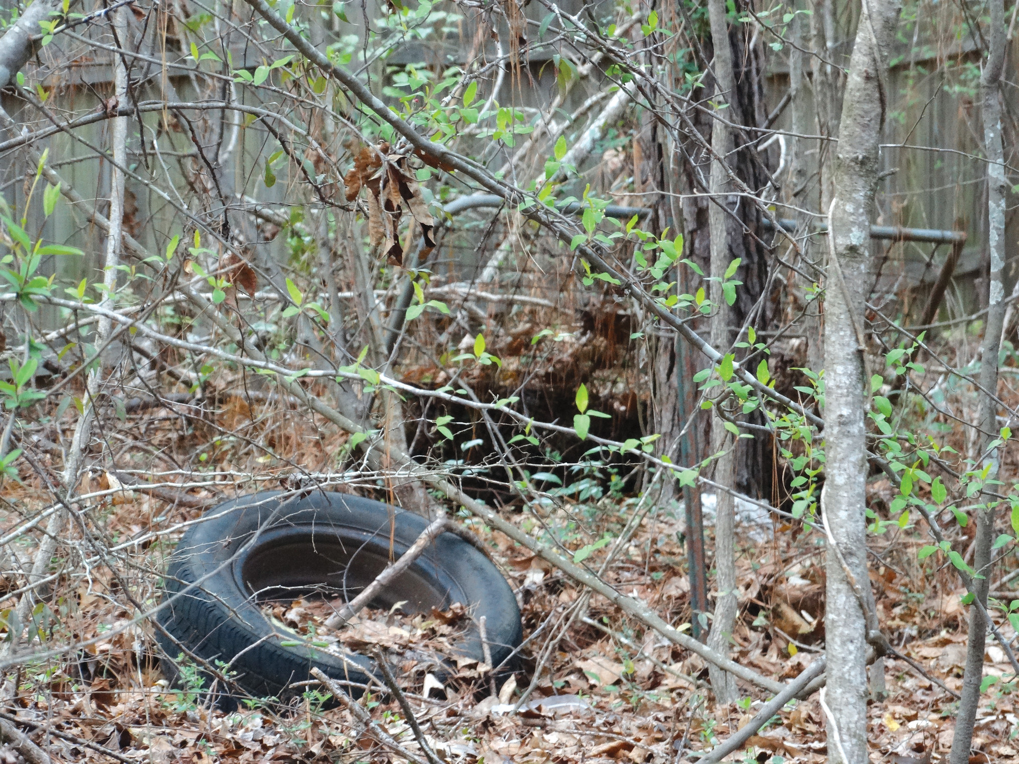 An old tire and metal frame are seen in the woods at Dillon Park on Sunday.