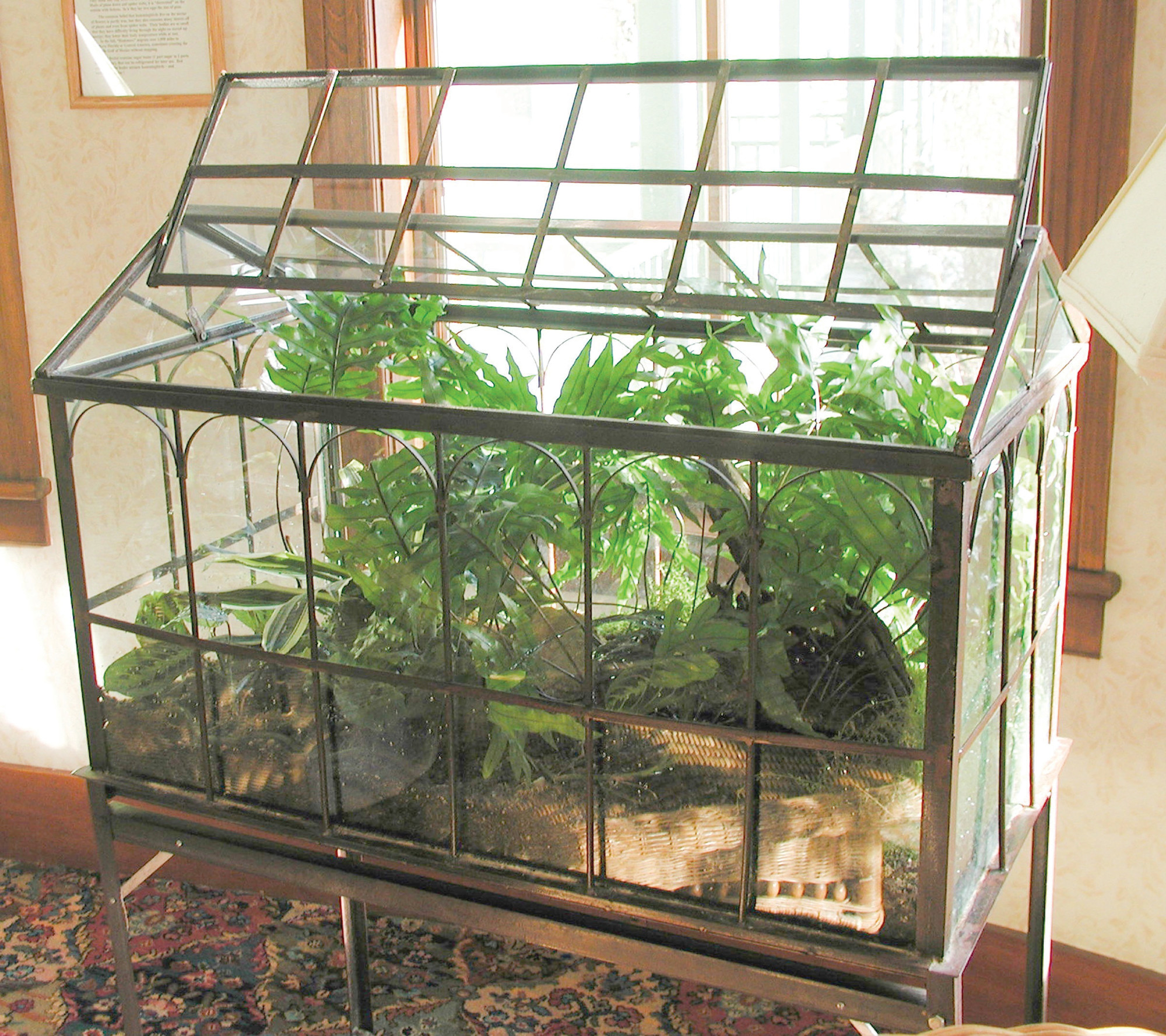 Plants Can Thrive With No Care At All In Wardian Cases The Sumter Item