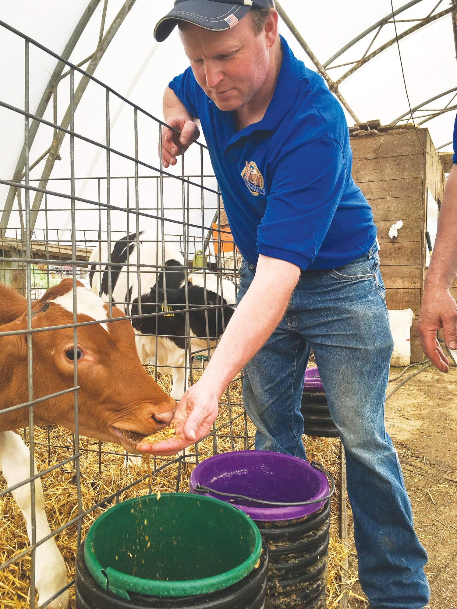 Dan Ripley, of the Ripley Family Farm in Moravia, New York, feeds a Guernsey calf. Some cows on the farm naturally produce milk without a protein some people blame for indigestion.