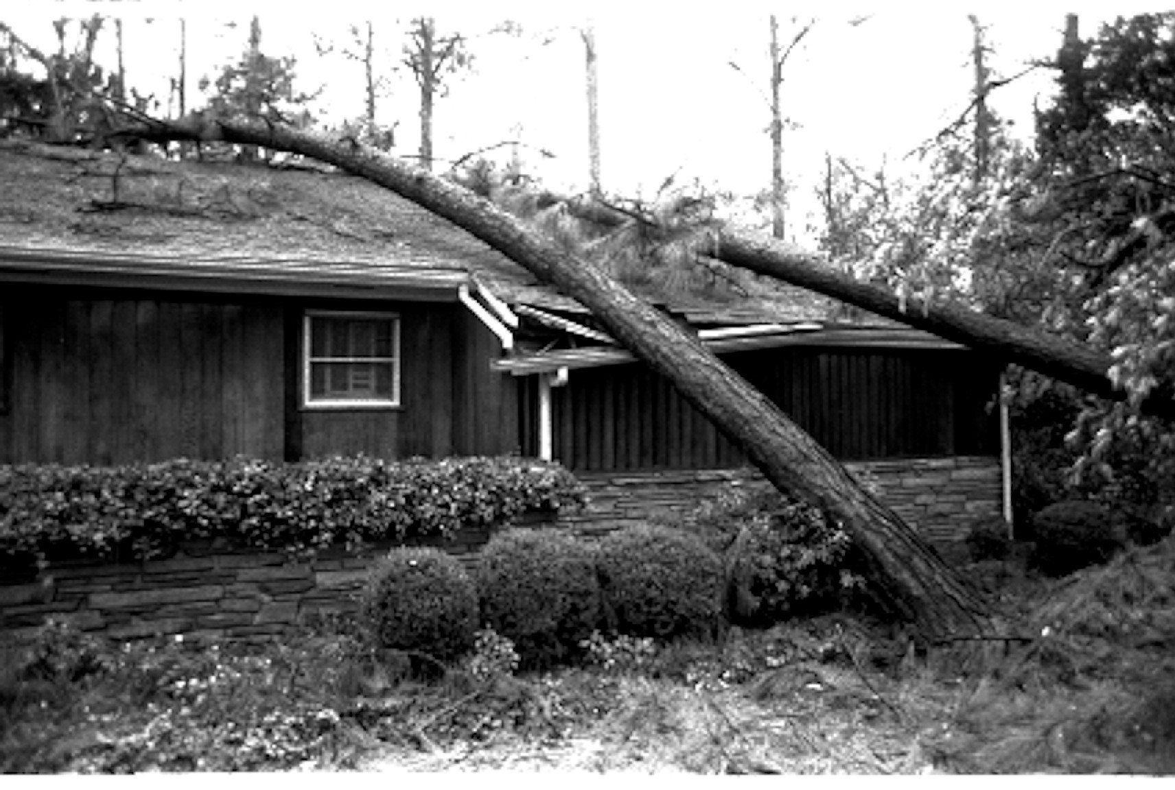 A tree rests on a house after Hurricane Hugo.