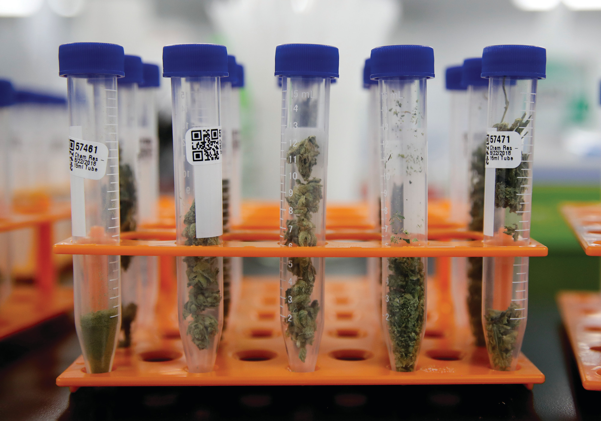 Marijuana samples are organized at Cannalysis, a cannabis testing laboratory, in Santa Ana, California. Nearly 20 percent of the marijuana and marijuana products tested in California for potency and purity have failed, according to state data provided to The Associated Press.