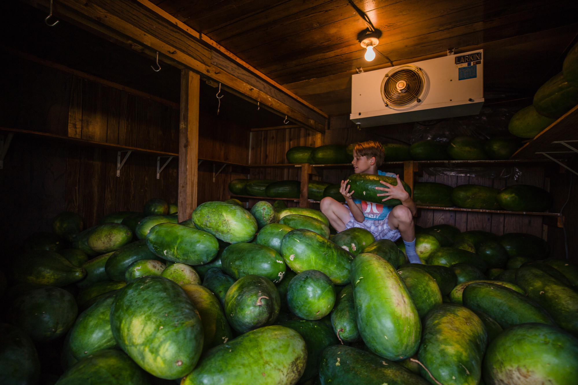 Danny Bradford, Nat Bradford's son, moves some watermelons around in their refrigerated storage unit ahead of Hurricane Florence on Friday, Sept. 14.