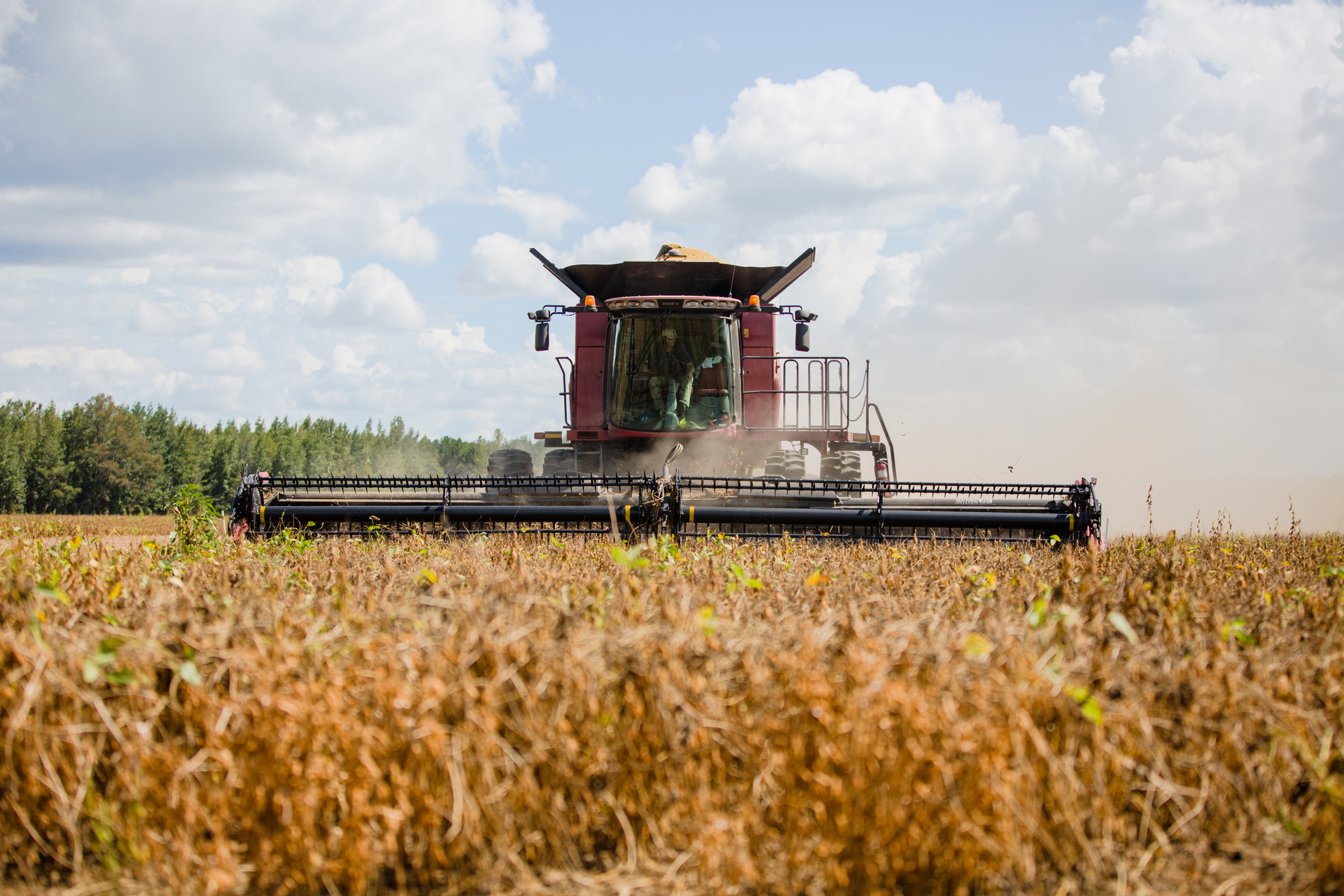 Ricky Atkinson harvests soybeans to get them out of the path of Hurricane Florence on Wednesday, Sept. 13.