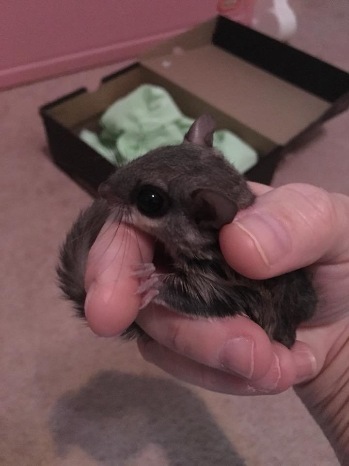 The baby squirrel was all dry and warm and doing fine after being rescued during Tropical Storm Michael.