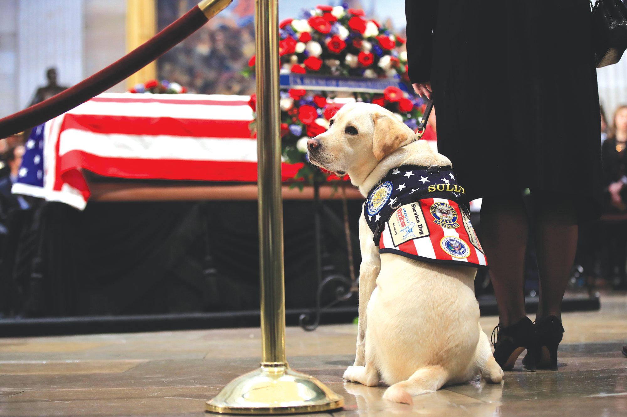 Sully, Bush's service dog, pays his   respects to President Bush on Tuesday.