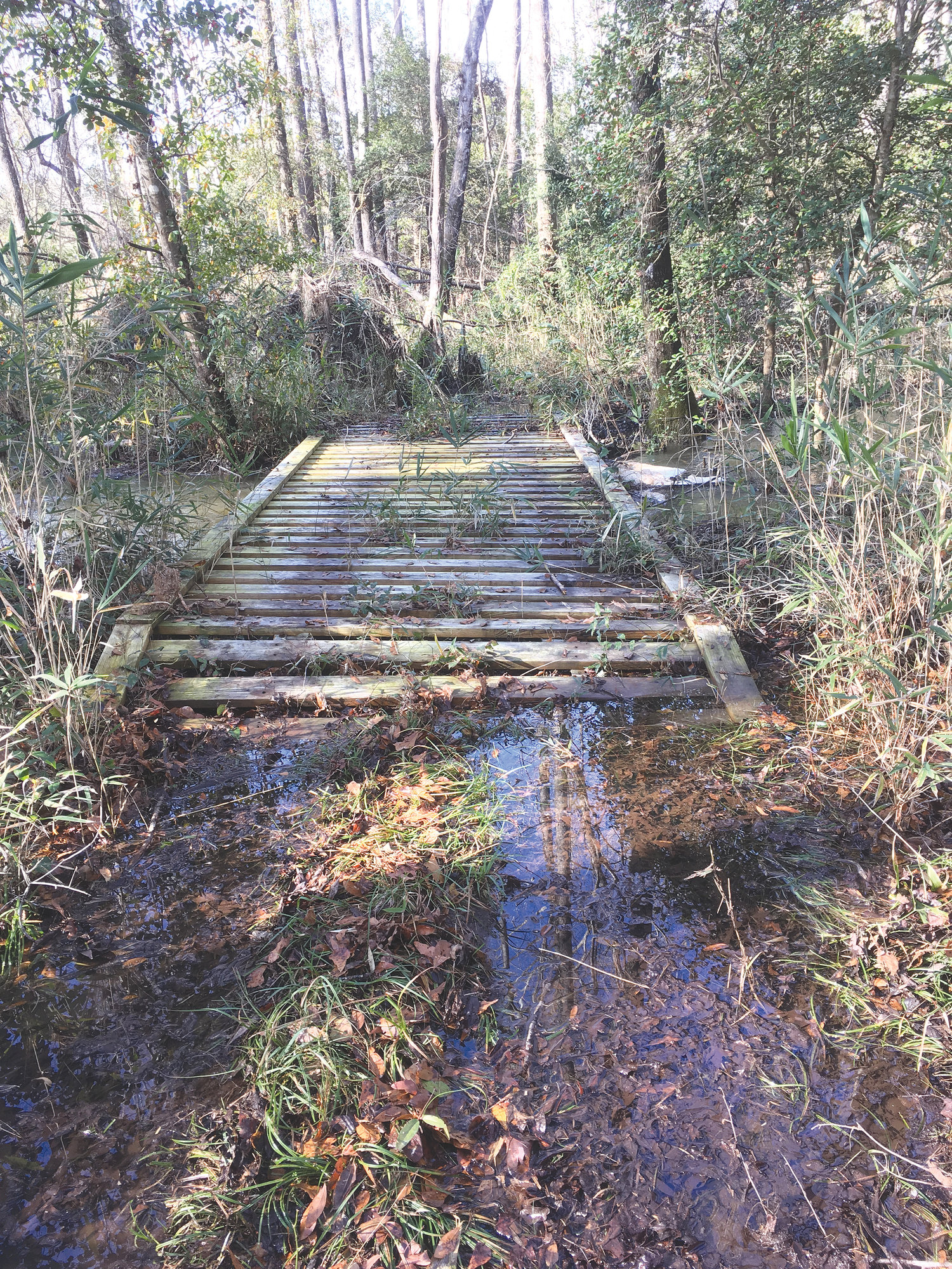 DAN GEDDINGS / SPECIAL TO THE SUMTER ITEMFinding a bridge on the creek was a nice surprise.