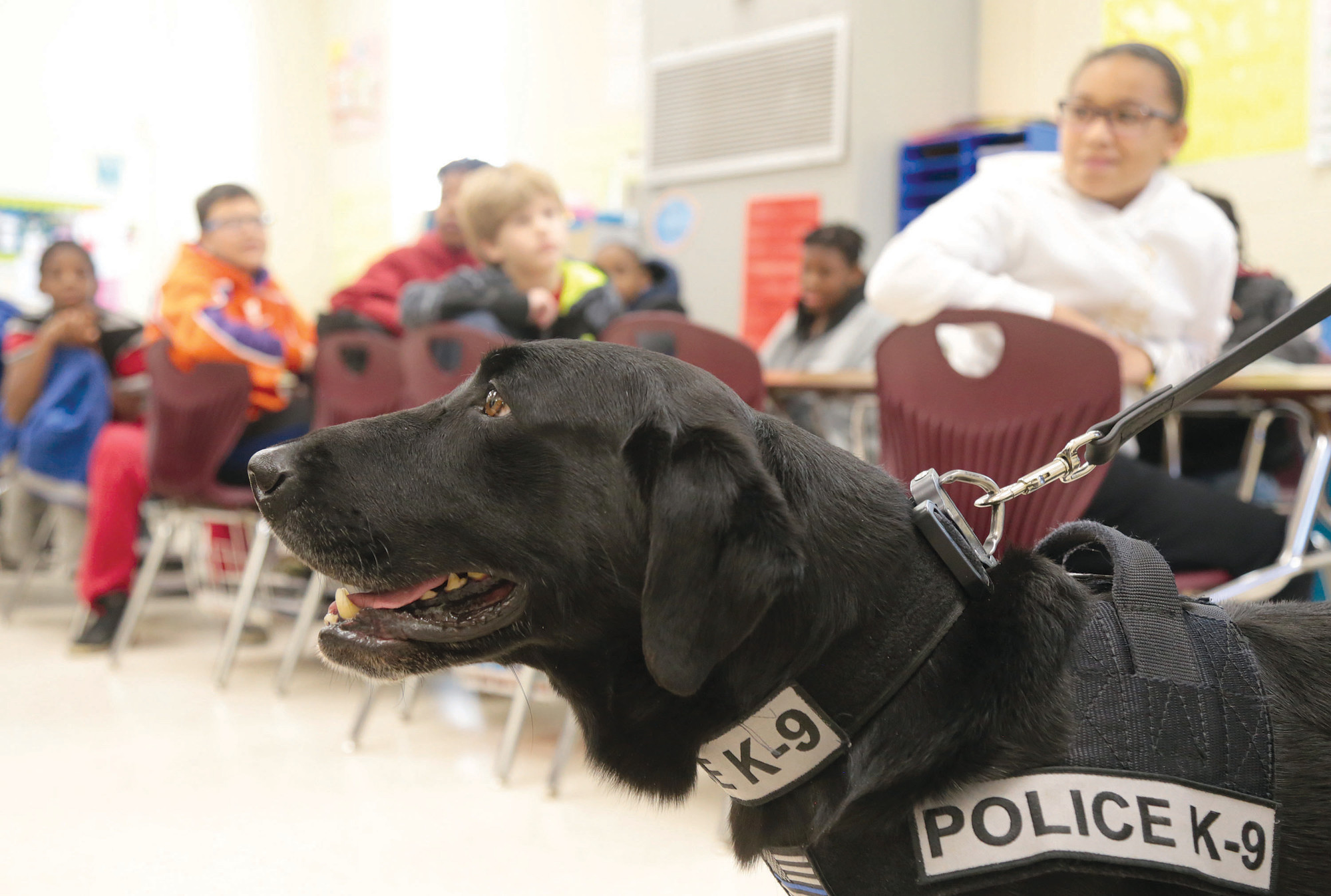 K-9 Riley visits students at Crosswell Elementary School on Monday. K-9 officers are brought into schools to teach students what the K-9s do to help keep their community safe and to lessen the students' fear of the dogs.