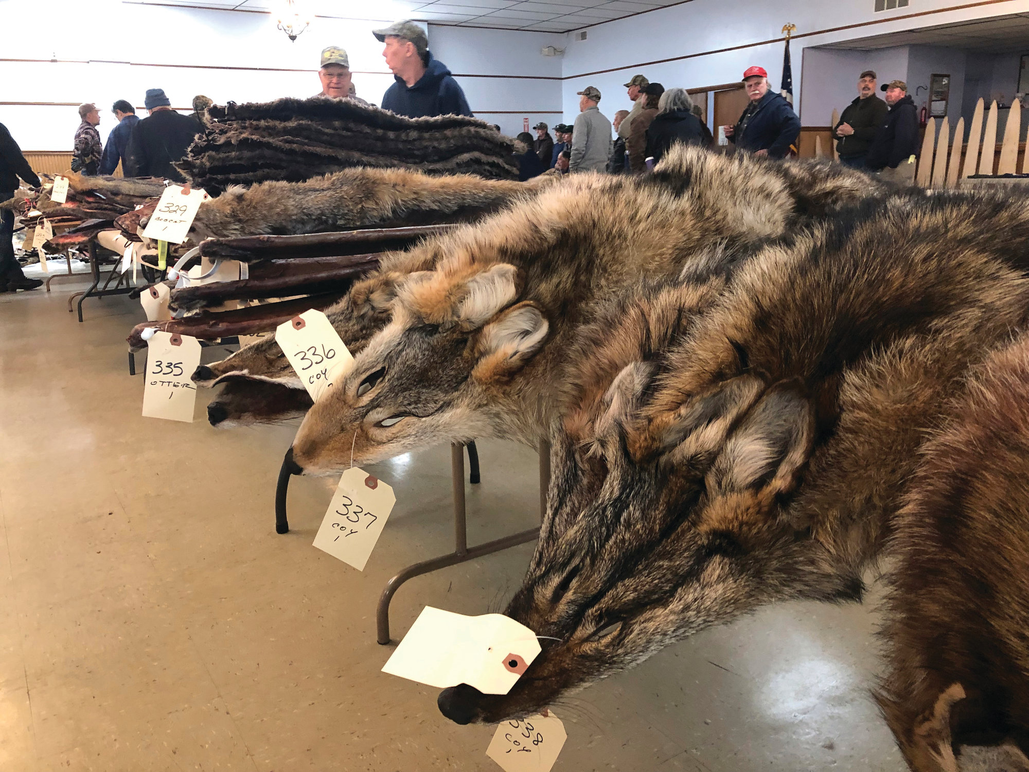 cba52721df7 Coyote fur in big demand thanks to popular parkas   The Sumter Item