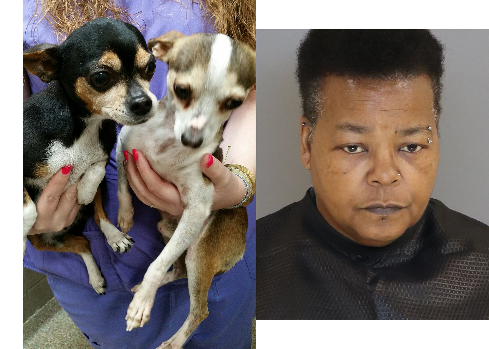 Married couple ID'd as suspects who threw 4 Chihuahuas over