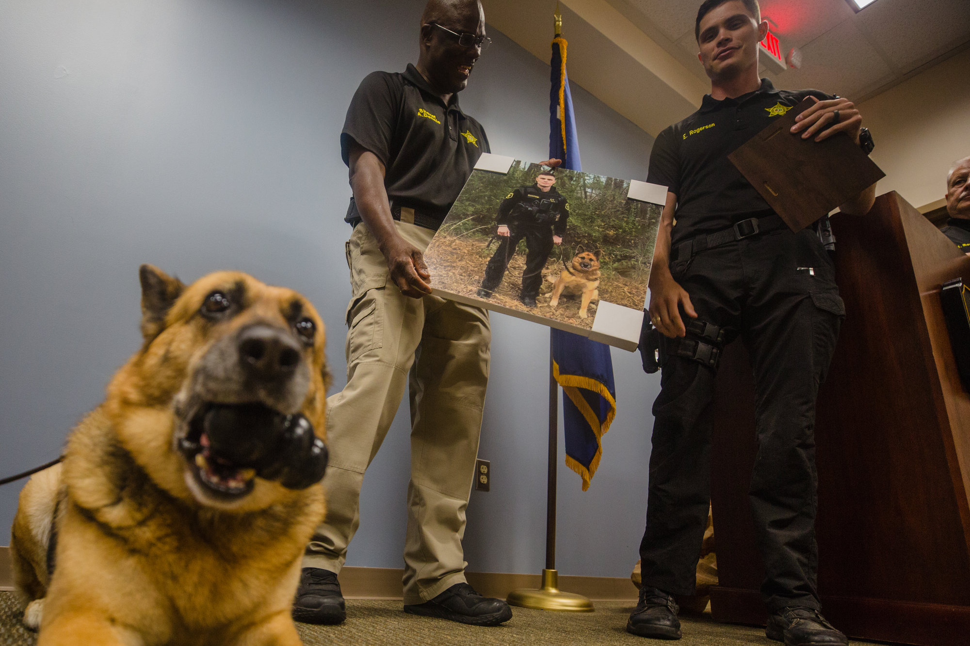 After nine years working as a K-9 with the Sumter County Sheriff's Office, Dina will now enjoy retirement at the home of her handler, Cpl. Evan Rogerson. She was congratulated during a ceremony Friday.