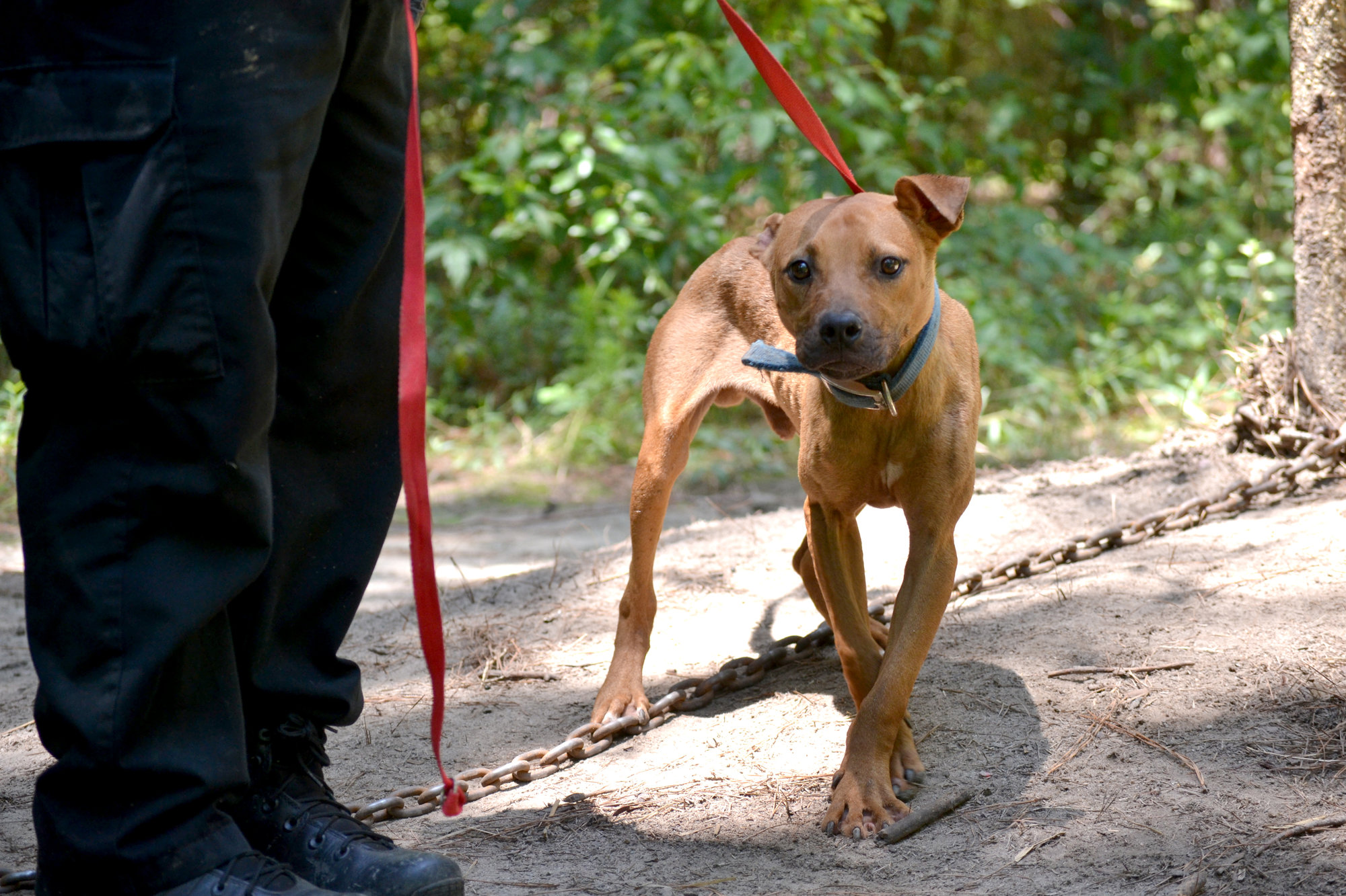 BREAKING: Sumter County man arrested for dog fighting