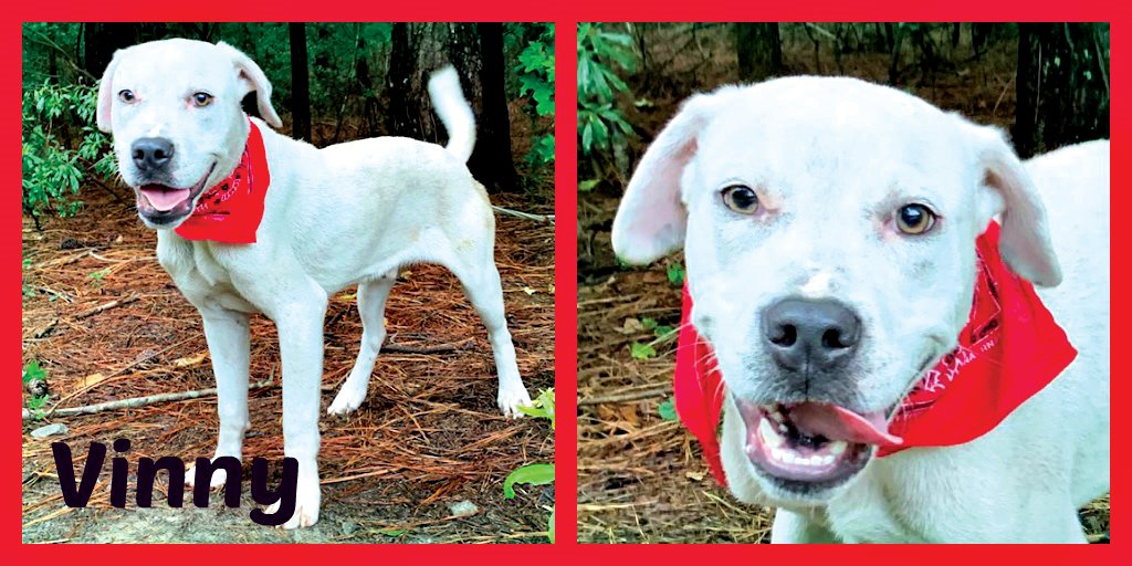 Vinny deserves a loving home, family of his own | The Sumter