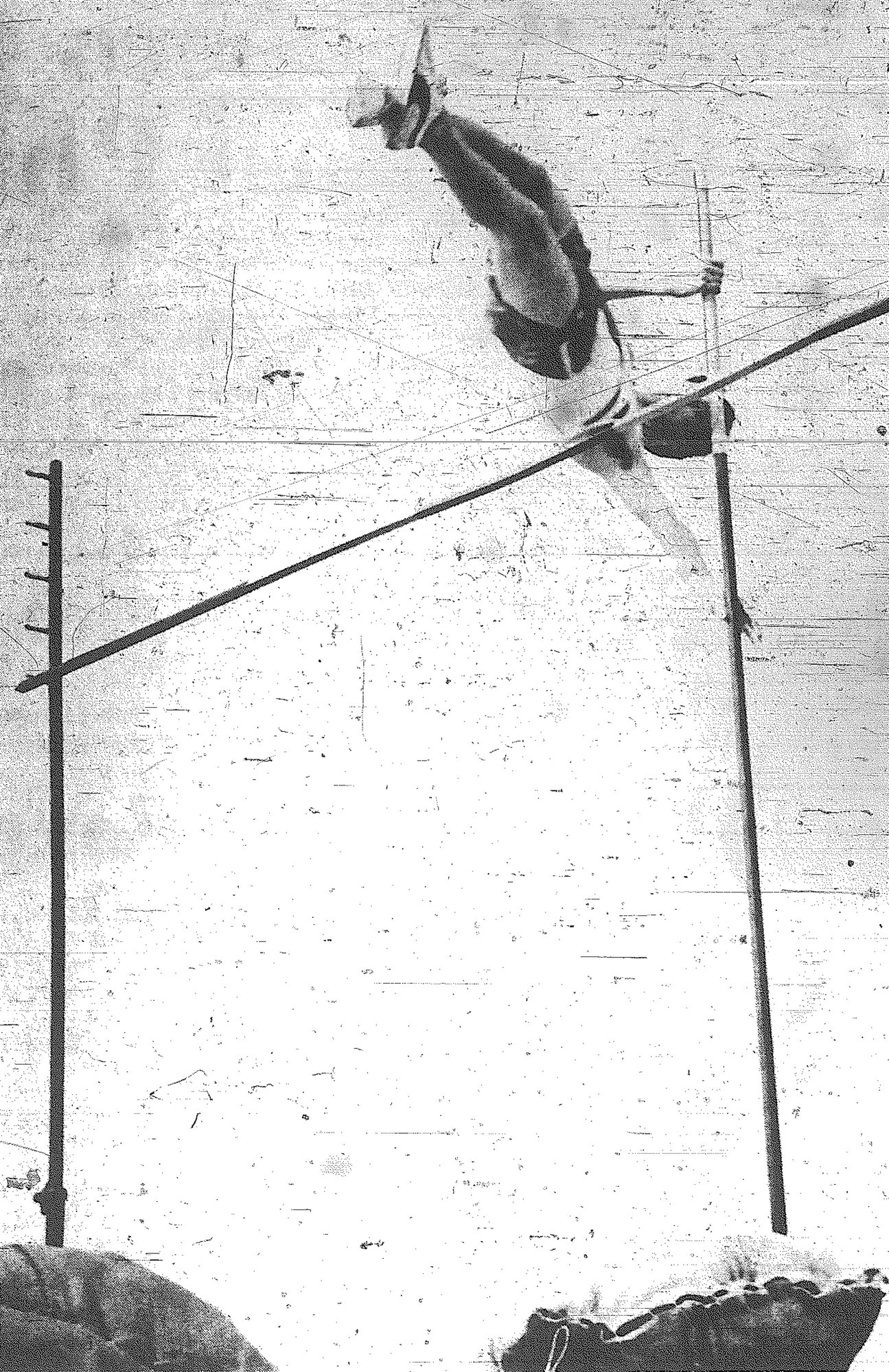 1970 - Edmunds High School's John Ingram shows his form in the pole vault event May 1. Ingram placed fourth while teammate Blaise Lareau won the event with a vault of 12 feet.