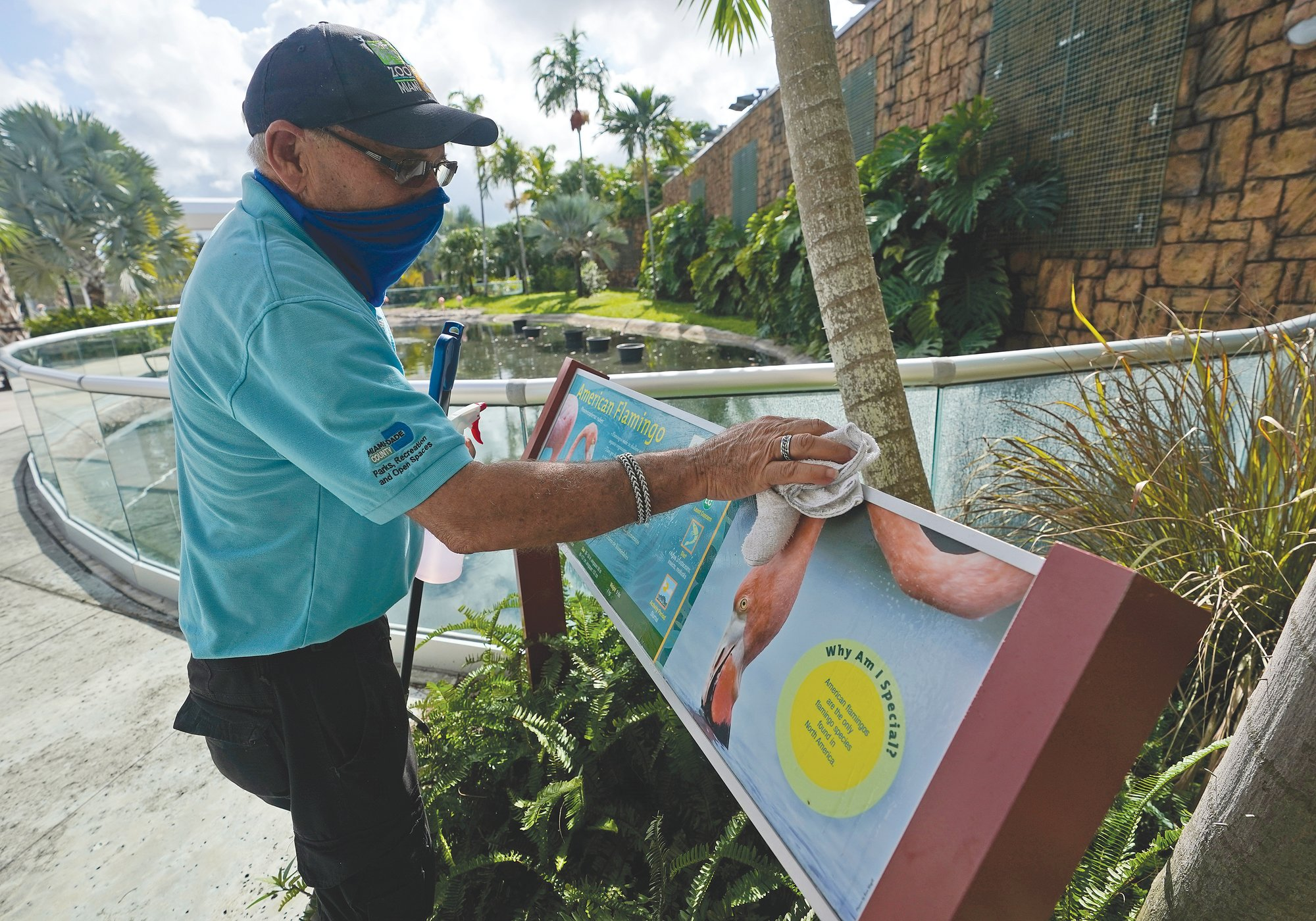 THE ASSOCIATED PRESS  Zoo Miami employee Gaspar Ventos sanitizes a sign at the American flamingo display area Tuesday at the zoo in Miami. The zoo reopened Tuesday as Miami-Dade and Broward counties moved to Phase 2 of reopening on Monday.