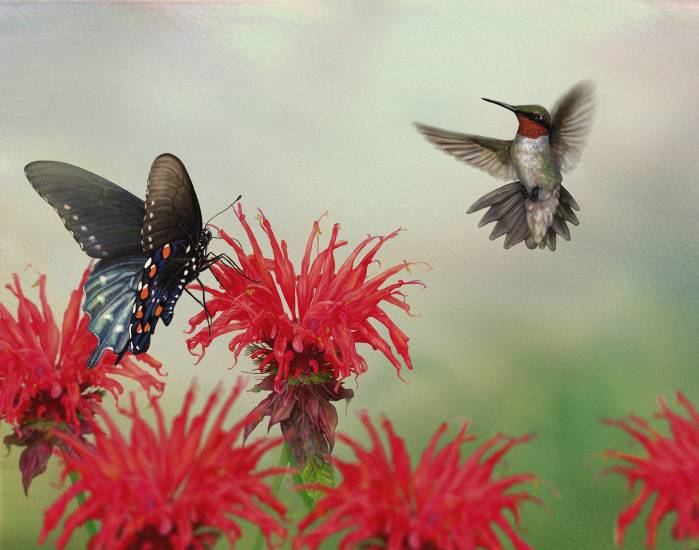 """Scarlet Pollinators"" by Stephanie Rozzo (2013 digital print) is in the Denver Botanic Gardens' exhibit ""Plants, Birds and Pollinators: Art Serving Science,"" through Feb. 9. Courtesy photo"