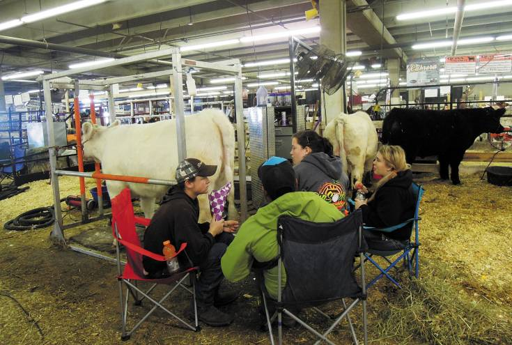 Rachelle Quinn (right) and her fan group, high school friends (left to right) Destry Banister, 16, Travis Booth, 17, and Sierra Sanburg, 16, have some down time before the next cow class. Photo by Virginia Grantier