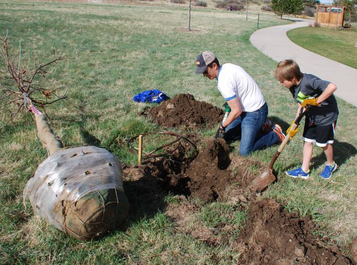 A father and son plant a tree for Arbor Day at Tallman Meadow Park in the Idyllwilde neighborhood. Courtesy photo
