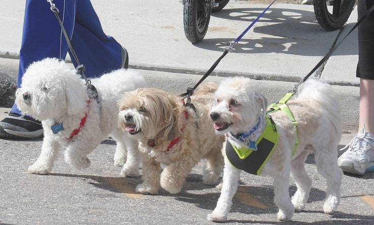 Many participants in the NAMI Walk on May 17 in Centennial brought their dogs along for a little exercise.