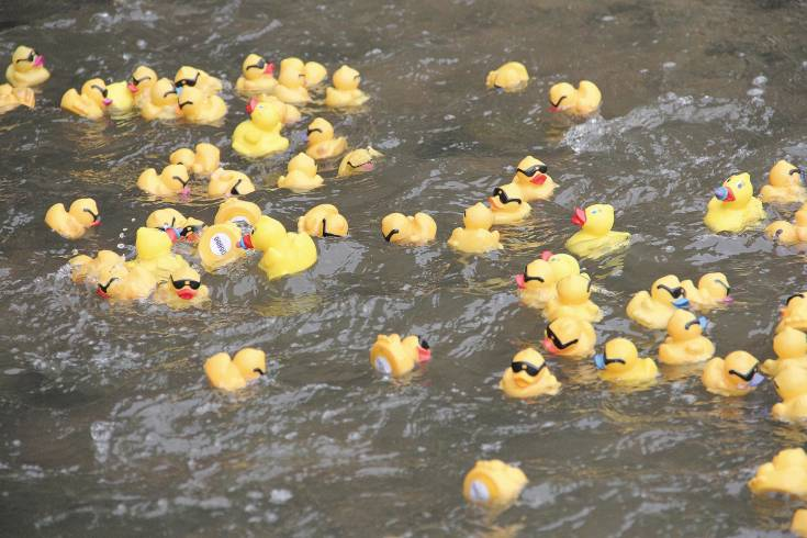 Ducks race down Plum Creek during the 2014 Ducky Derby in Castle Rock.