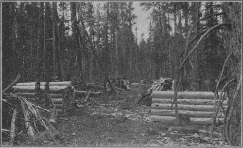 Railroad ties decked for hauling in lodgepole pine timber, Colorado National Forest.