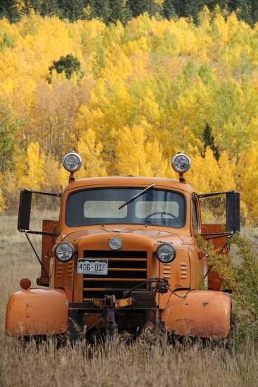 Dumptruck load of color in Goldfield, Wednesday afternoon, Sept. 24.