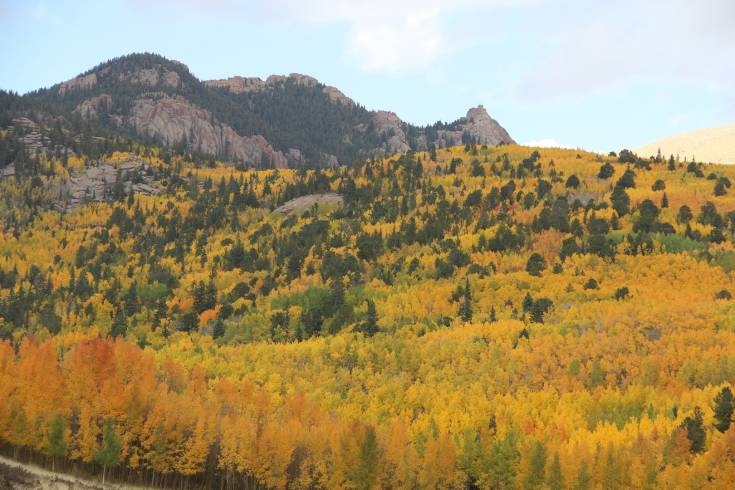 Gold Rush near Gillette Flats Wednesday, Sept. 24.
