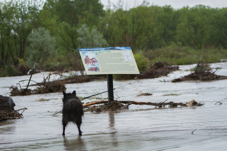 Many sections of the Plum Creek Trail were submerged following the heavy rain of June 11 and 12. Photo by Ben Chang