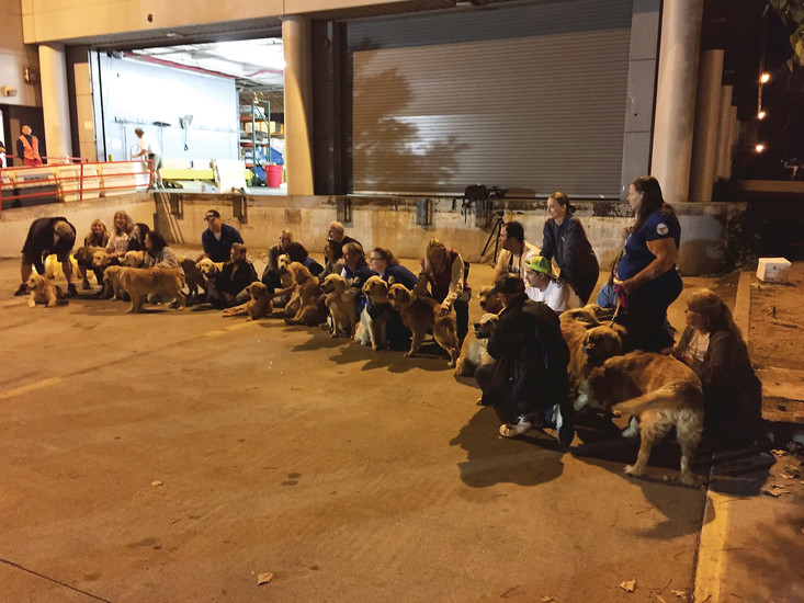After a 12-hour flight, 18 golden retrievers sit with volunteers from the Golden Retriever Rescue of the Rockies and the Southern California Golden Retriever Rescue. Courtesy photo