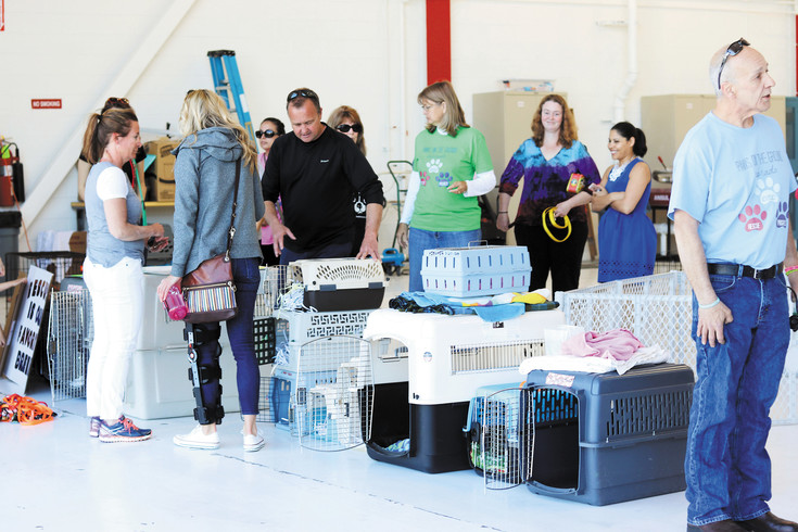 Volunteers from front range animal rescues wait for death row dogs and cats to arrive by plane at Centennial Airport on May 4.