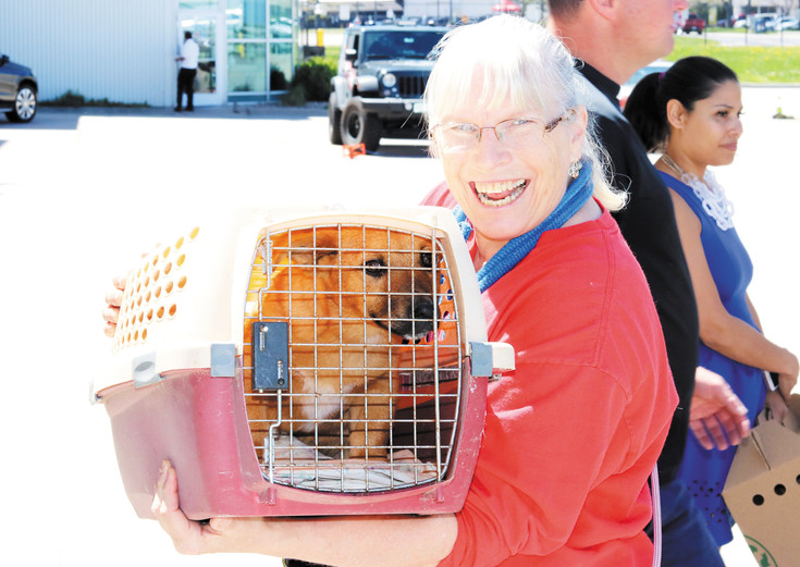 Suzanne Lively, who helps with animal rescues in the front range, picks up a corgi from the Dog is My CoPilot flight on May 4.