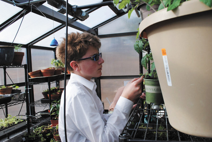 Mackintosh Academy eighth-grader Quinn Yates checks on plants in the school's student-run greenhouse. Mackintosh recently received a grant to add a hydroponic system to the greenhouse.