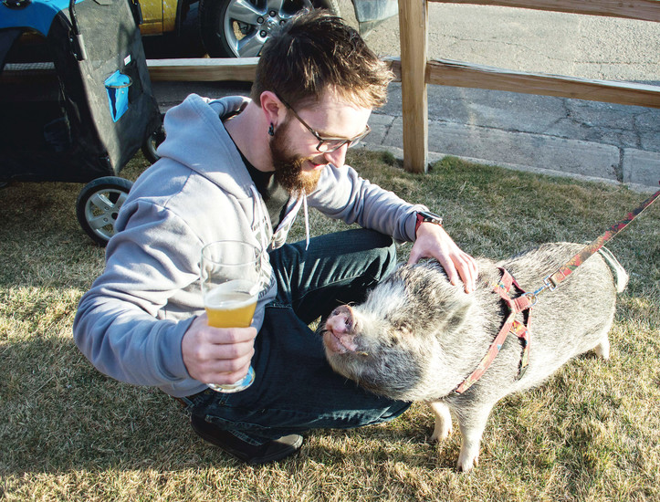 A man with a curious pot-bellied pig.